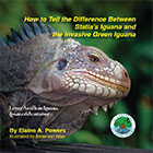 Statia's Iguana
