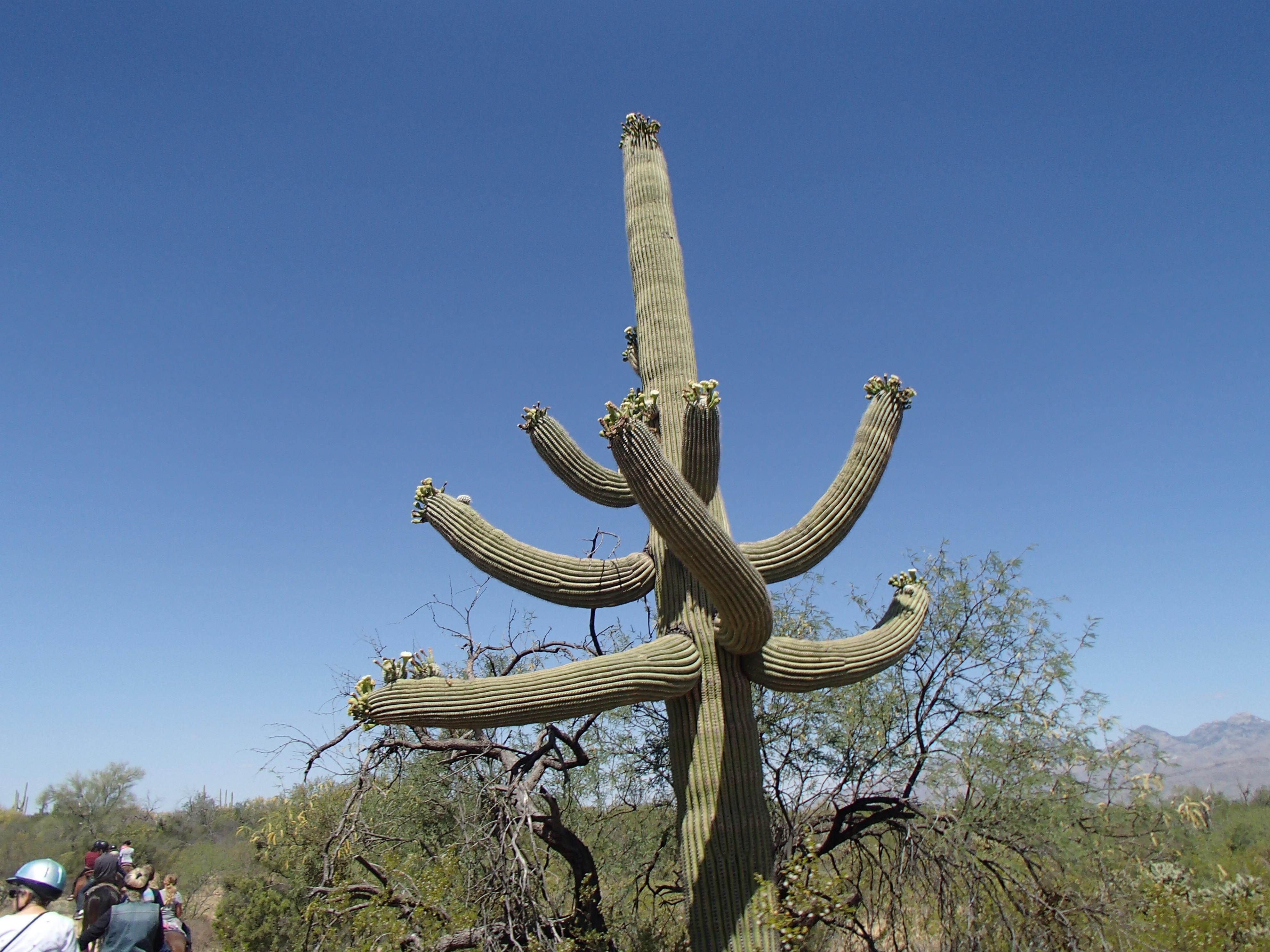 Plants of the Sonoran Desert | Elaine A Powers, Author