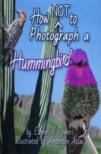 illustration of a hummingbird on a cactus