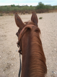 photo of the back of a horse's head