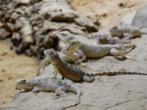 photo of a group of lizards on a rock