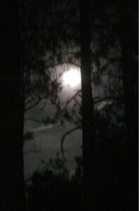 photo of a full moon with dark trees in the firefront