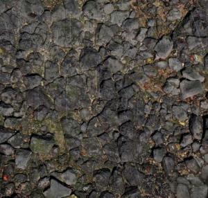 photo of chopped up images of iguanas