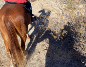 hindquarters of a horse