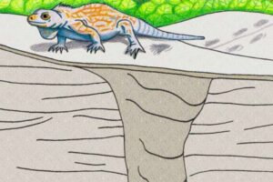 Illustration by Anthony Martin of prehistoric iguana burrow