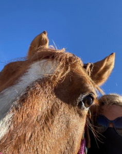 closeup photo of three year old quarter horse face