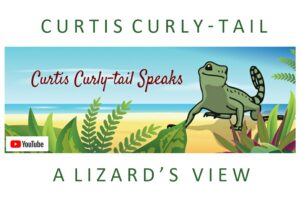 Graphic for Curtis curly-tail speaks