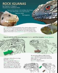 photo of iguana conservation brochure