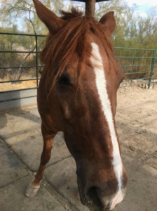close up of horse head