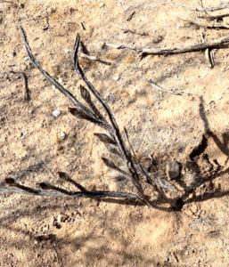 photo of plant in desert