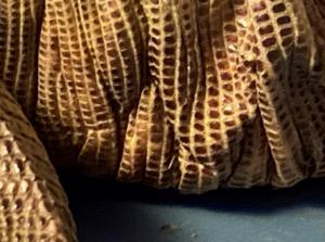 photo of shedding skin ridges red tegu