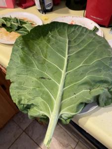 photo of huge collard greens leaf