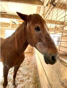 photo of horse, Simby
