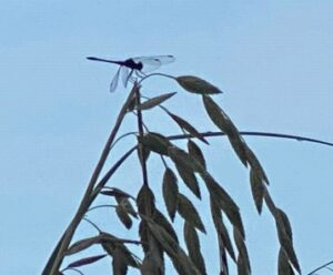 photo of dragonfly on plant
